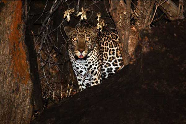Nocturnal – Night Game Drives